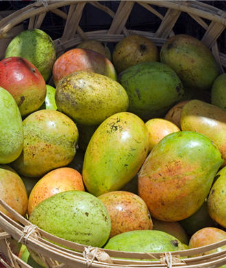 African Mango: The Miracle Weight-Loss Supplement?