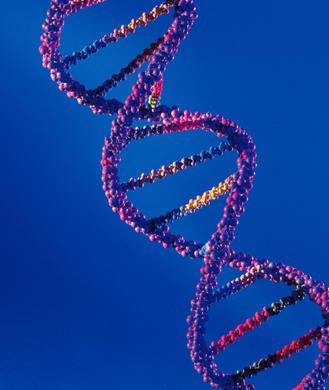 Ask the Diet Doctor: Is the DNA Diet Bogus?