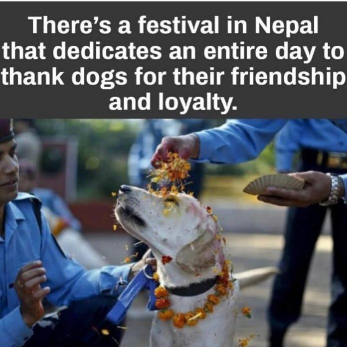 Our loyal, loving, best friends are our precious animals. So happy to see them b...