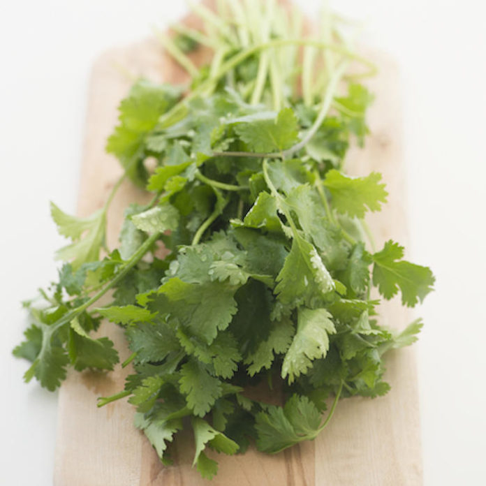 The Gross Details Behind the FDA Cilantro Ban