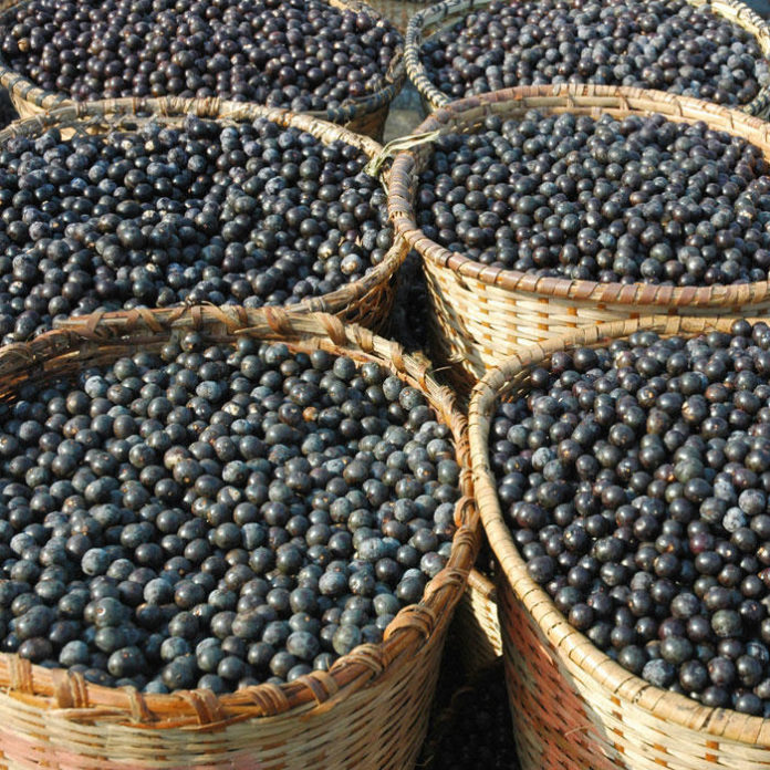 Surprising Things You Didn't Know About Acai