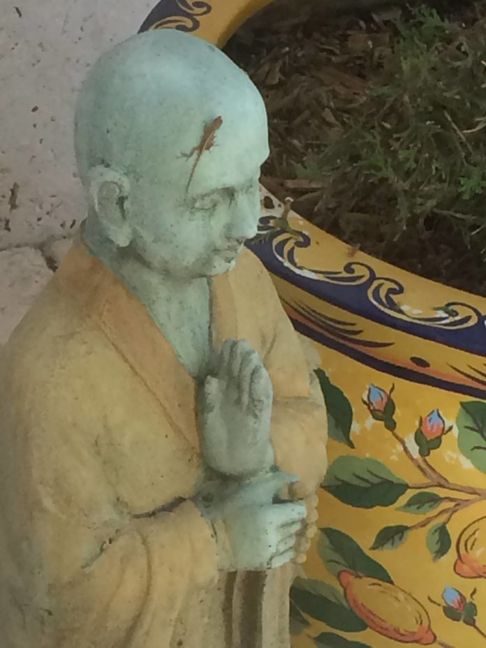 #ThePractice: Waking Up- Meditation  Love this on my patio this morning- even th...