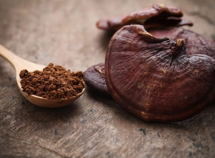 Reishi Mushroom: The Health Benefits of This Magical Fungus