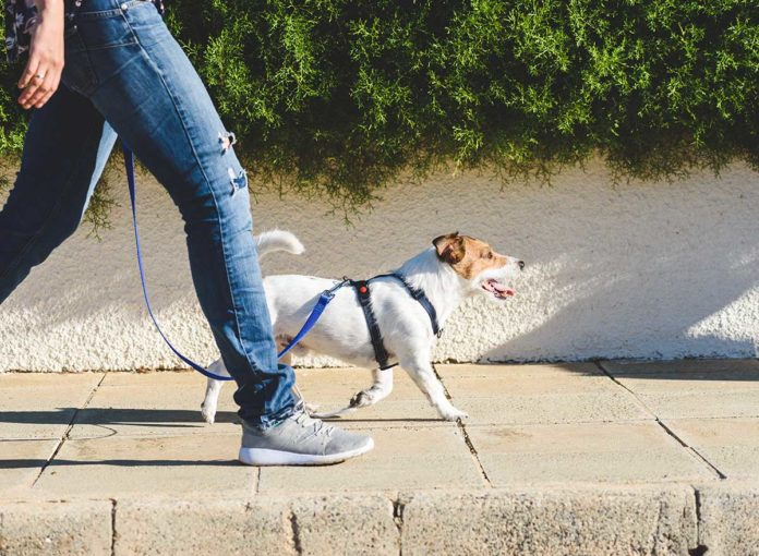 The #1 Pet Mistake You Don't Know You're Making Right Now