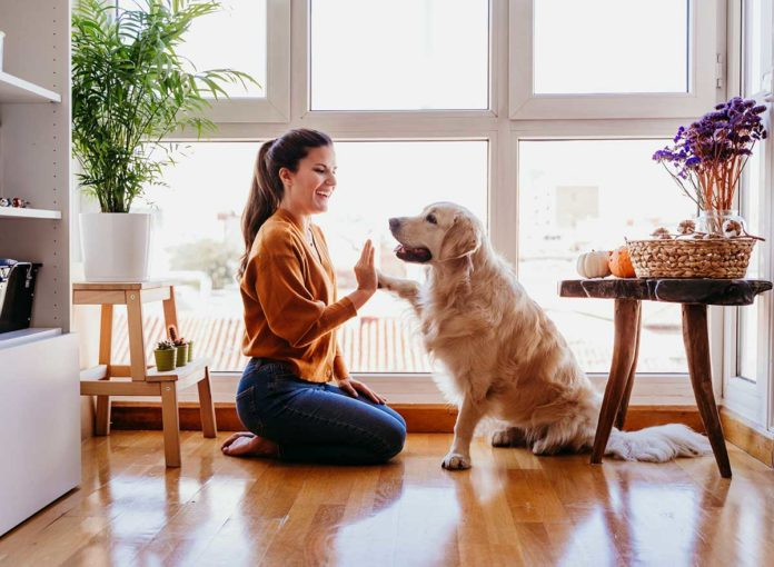 8 Ways to Keep Your Dog Healthy During Quarantine