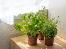 This One Herb Can Block Fat, New Study Says