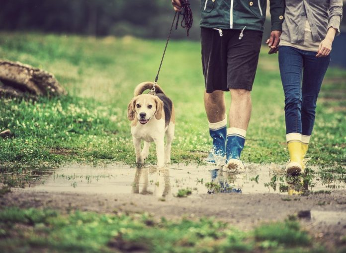 One Major Side Effect of Walking Every Day, Says New Study